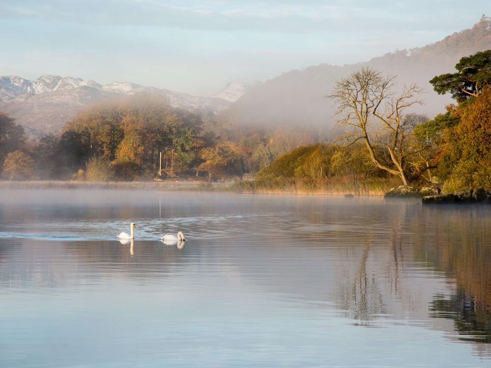 lake windermere with swans